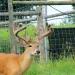 hunting015