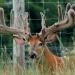 hunting018
